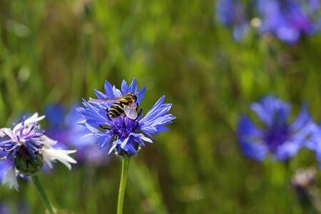 The fly sits on a flower Reklamní fotografie