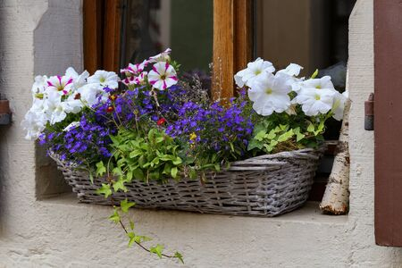 Beautiful garden flowers  Petunia on the windowsill