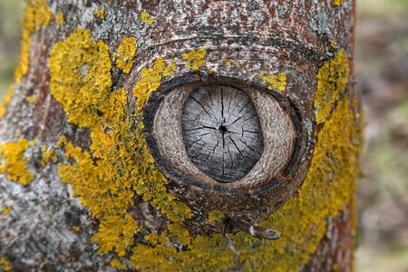 Eye of nature  Knot on the tree