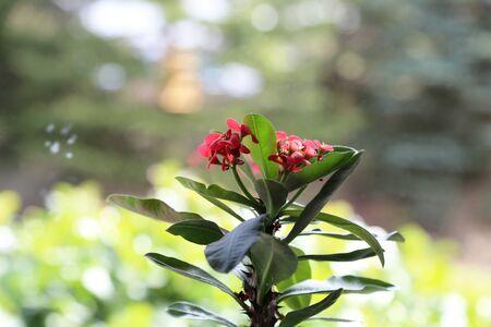 Beautiful red flowers. Beautiful red flowers in the garden.