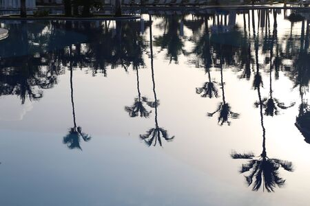 Palms are reflected in the pool water