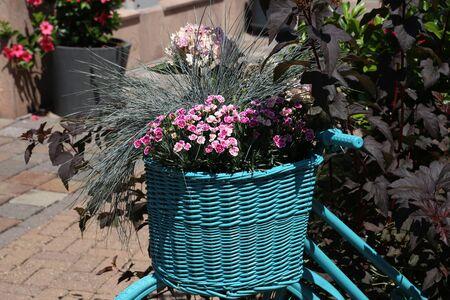 Beautiful flowers in a basket Reklamní fotografie