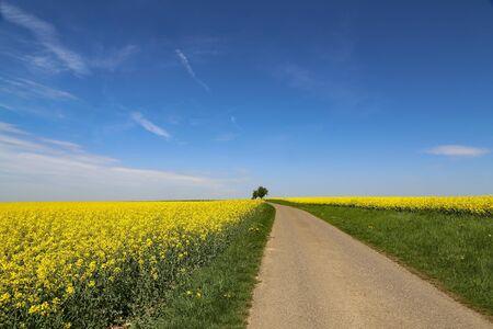 Straße zwischen den Feldern / Gelbes Rapsfeld