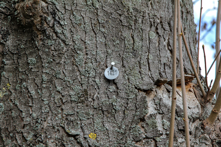 Tag on a tree trunk in the Park.