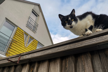 The cat sits on a high fence and looks down.