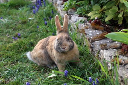 Beautiful cute rabbit on a green summer meadow. Hare walking on nature in the grass.