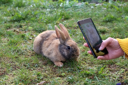 Photoshooting for Easter Bunny. Beautiful cute rabbit on a green summer meadow. Foto de archivo