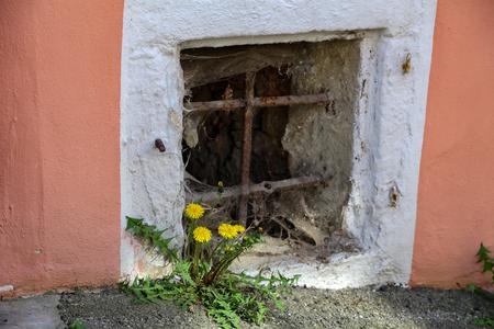 A flowering dandelion grew up on a stone wall Фото со стока