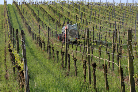 farmer watering the vineyards with a tractor. Imagens - 121961115