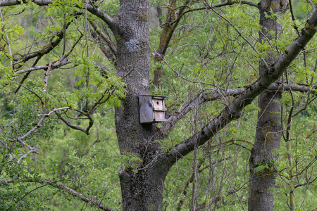 Old wooden birdhouse high on a tree. Stockfoto - 123194178