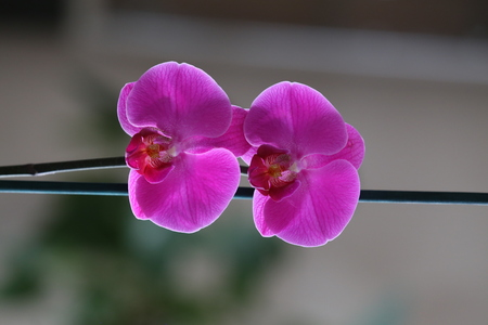 Beautiful purple orchid flower are on the windowsill.
