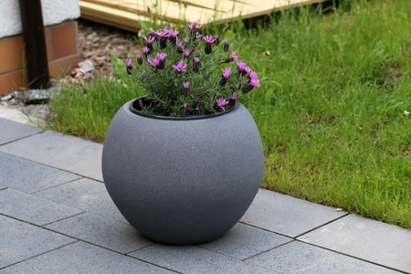 A pot of violet flowers stands on the terrace near the house Imagens