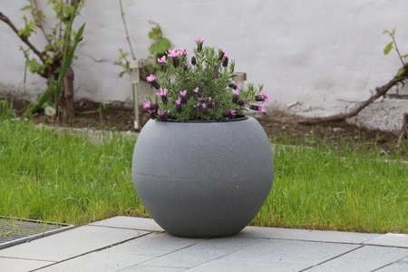 A pot of violet flowers stands on the terrace near the house Banque d'images - 123867503