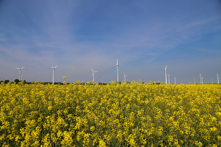 Wind engines in a rapeseed field in Germany.