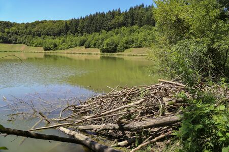 Beavers dwelling on a forest lake Stock Photo