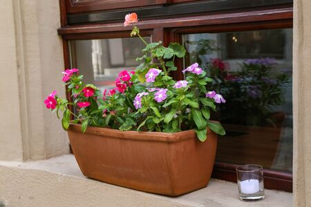 A pot with beautiful flowers stands on the windowsill Фото со стока