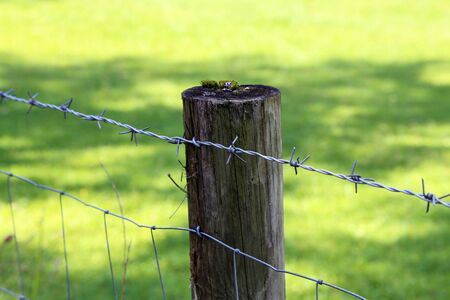 Fence post with barbed wire on a green background