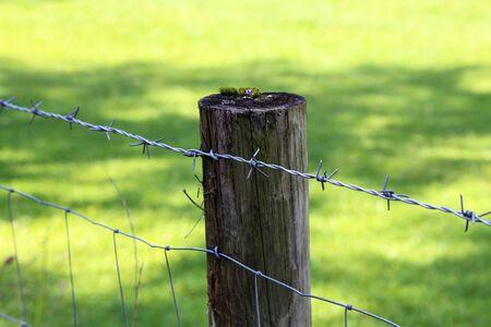 Poste de valla con alambre de púas sobre un fondo verde Foto de archivo