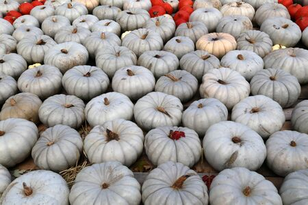 Fresh healthy bio pumpkins on farmer agricultural market at autumn. Healthy food.
