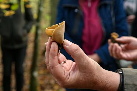 Mycologist demonstrates and talks about various forest mushrooms. Foto de archivo