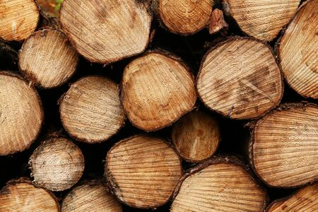 Close up wooden stacked sawn logs for background or abstraction.