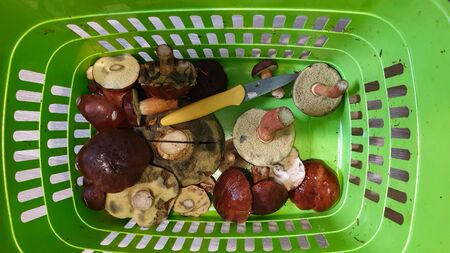 Basket with various raw mushrooms on the table.