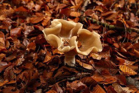 Yellow forest mushrooms grew on a fallen tree.