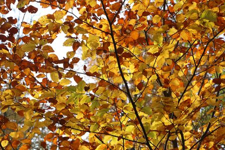 Bright yellow leaves in the autumn forest. Reklamní fotografie