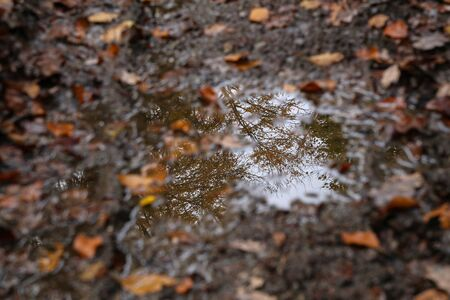Autumn forest reflected in a puddle Reklamní fotografie