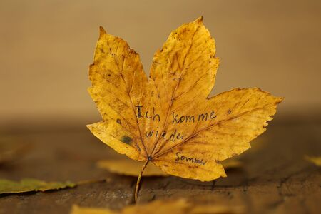 Text on the maple leaf in German: Ill be back. summer