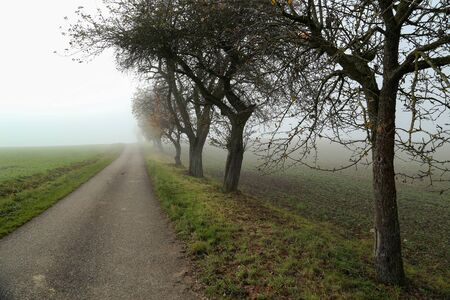Morning fog. Autumn landscape with roads and trees. Reklamní fotografie