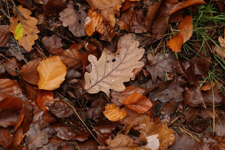 Brown autumn leaves lie on the ground. Reklamní fotografie