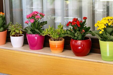 Various flowers in pots stand on the windowsill. Фото со стока