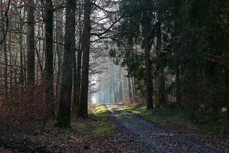 Morning in the forest on a warm winter.