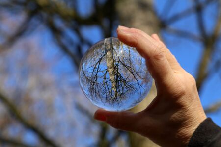 Trees in the forest and blue sky through a transparent glass ball