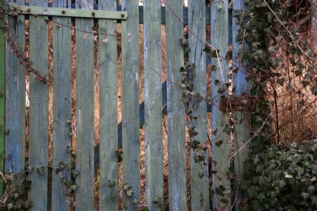 Old wooden fence with peeling green paint.