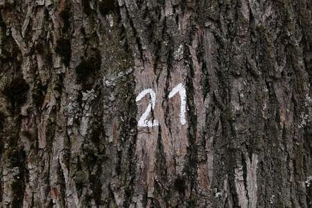 21 - All trees in the park are counted and numbered.