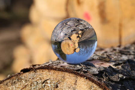 Freshly sawn logs in nature through a glass ball.