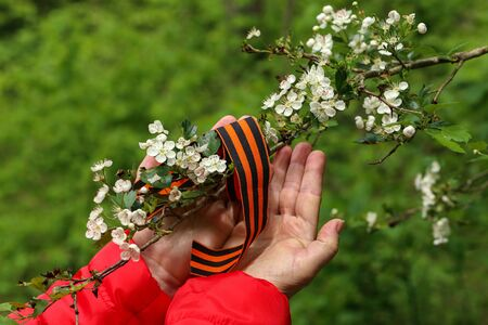 Victory Day. Arrangement of George ribbon, flowering branch and womans hands Фото со стока