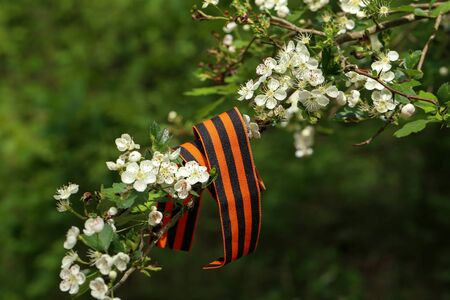 Victory Day. George ribbon on a flowering branch.