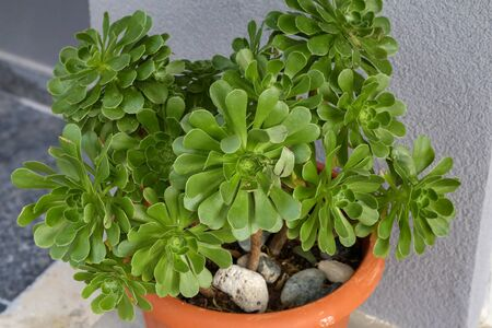 Beautiful succulent plants in the flowerpot outdoors.