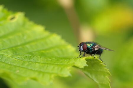 Macro photo of a fly sitting on green leaf of a plant