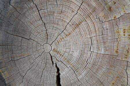 Annual rings and cracks on a tree cut.