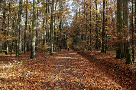 Woman walking in a beautiful autumn forest Standard-Bild