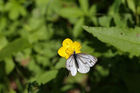 A white butterfly sits on a flower.