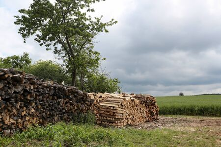 Dry chopped firewood stacked in a woodpile in the forest