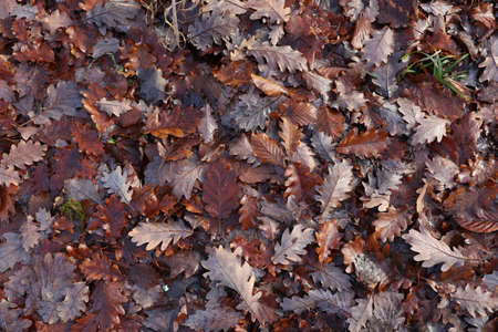 Fallen from a tree leaves in the forest in autumn Reklamní fotografie