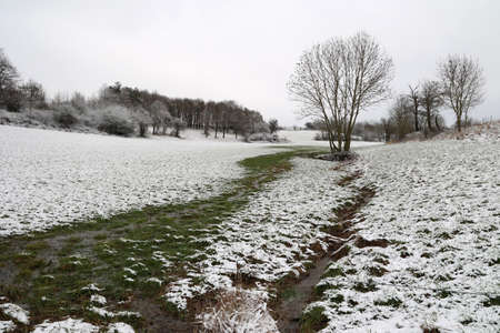 Winter landscape with a meadow covered with snow