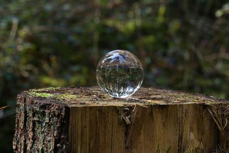 Glass ball on a tree stump in the forest Reklamní fotografie