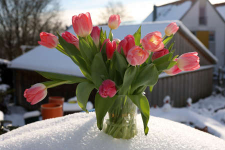 A bouquet of red tulips in a vase in the snow